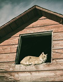 An adult orange cat sitting in the window of a barn.