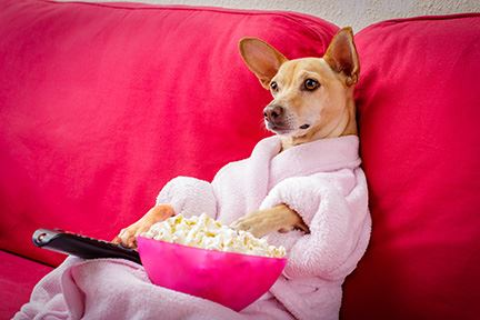 a dog, in a robe with a remote control on a sofa